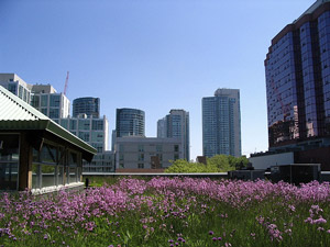 Green roof in Toronto