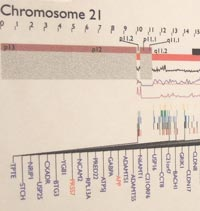 chromosome 21 information